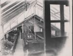 Greenhouses from office 1907
